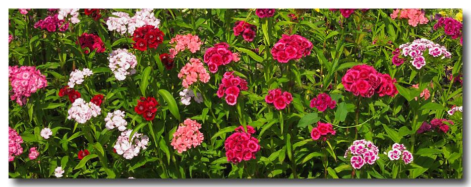 Fleurs jardins photos for Guide des fleurs du jardin